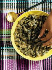 mopani-worms